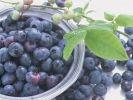 Blueberries IQF