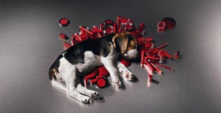 Confira marcas de cosméticos que NÃO fazem testes em animais