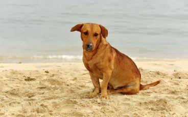 Campanhas querem evitar abandono de animais nas praias
