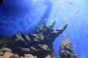 Em um ano, Aquário de Paranaguá recebeu mais de 300 mil visitantes