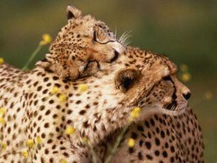 Os animais têm sentimento, é lei... E o que muda?