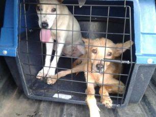 Empresa aérea Gol passa a permitir cães e gatos de estimação na cabine