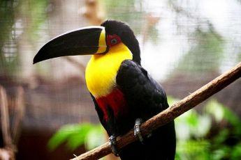 Zoos e aquários têm papel importante na conservação