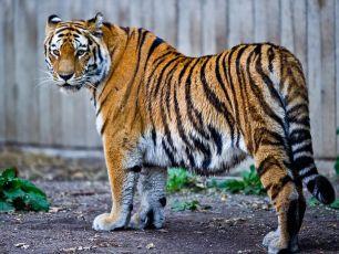 Zoos: Capacitação e integração, primeiros passos de um longo caminho