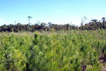 Lista de Espécies Exóticas Invasoras é atualizada no Paraná