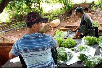 Paraná tem 1.485 propriedades rurais certificadas com produção de orgânicos