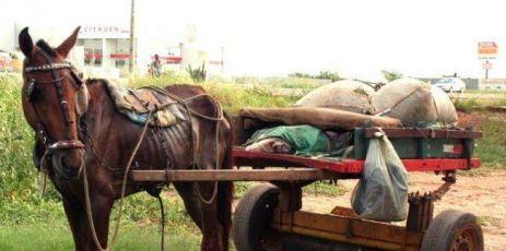 Câmara aprova em 2º turno lei que proíbe uso de cavalos por carrinheiros