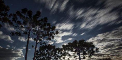 Produtores pedem liberação para corte de araucárias nativas