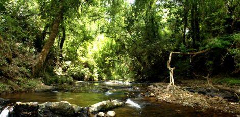 Governo edita regras para Pagamento Por Serviços Ambientais