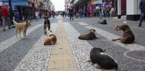 Prefeito sanciona lei de adoção responsável de animais
