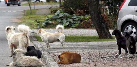 Prefeito autoriza licitação para implantação do Centro de Referência para Animais em Risco