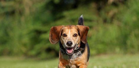 193 empresas brasileiras que não realizam testes em animais