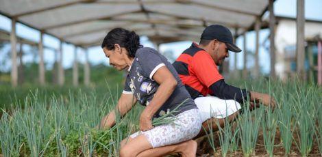 Agricultura familiar pode acabar com a fome no mundo