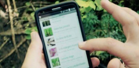 Aplicativo promove troca de sementes, mudas e alimentos orgânicos