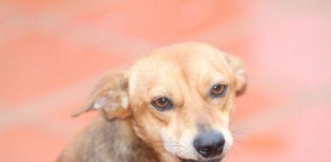 Três mil cães e gatos já foram castrados gratuitamente em Curitiba; saiba como participar