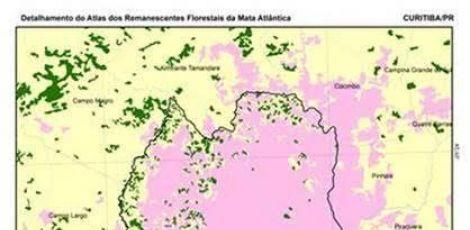 SOS Mata Atlântica divulga mapa inédito de Curitiba