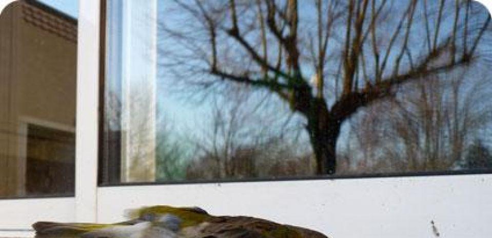 Projeto vai mapear acidentes com aves que se chocam com vidros em Curitiba