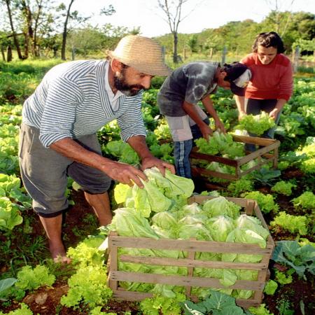 Fundação BB e BNDES abrem duas seleções de agroecologia e produção orgânica