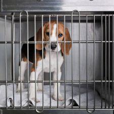 Parecer do deputado Rasca aprova projeto que proíbe uso de animais em testes