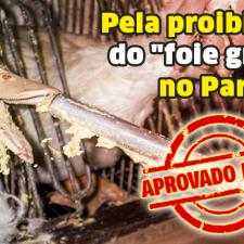 "CCJ aprova projeto que proíbe ""foie gras"" no Paraná"