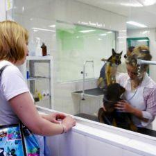 Governador sanciona lei que obriga pet shops a gravar serviços a clientes