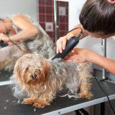 Projeto que obriga pet shops a gravarem serviços aos clientes vai à sanção