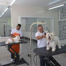 Aprovado projeto que obriga pet shops a gravarem seus serviços aos clientes