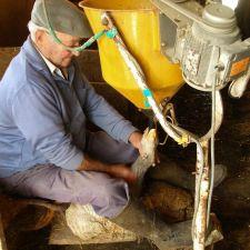 Rasca quer proibir produção e comércio de 'foie gras' no Paraná