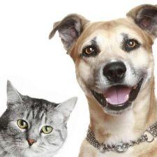 CCJ aprova criação da Semana de Conscientização dos Direitos dos Animais proposta por Rasca