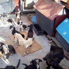 """Pesquisa pretende melhorar condições de vida para """"Acumuladores"""" e seus animais em Curitiba"""