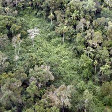 Câmara dos Deputados aprova projeto que pode reabrir Estrada do Colono e destruir o Parque Nacional do Iguaçu