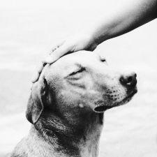 Assembleia aprova criação do Dia dos Protetores de Animais