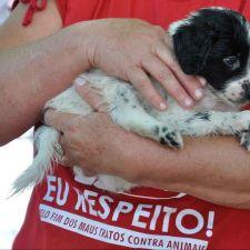 Paraná cadastrará entidades de proteção animal