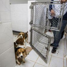 Projeto que proíbe uso de animais em testes é aprovado na Assembleia