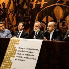 Plantação de eucaliptos poderá ser regulamentada no Paraná