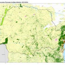 Paraná é o 4º estado que mais devasta Mata Atlântica