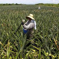 Projeto pode resgatar plantio de cítrico no Vale da Ribeira