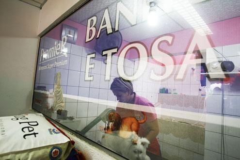Agora é obrigatório, pet shops do Paraná devem filmar serviço de banho e tosa