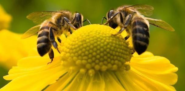 Projeto que incentiva a criação de abelhas nativas recebe emendas e volta à CCJ