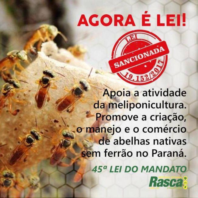Lei promete tirar da clandestinidade produtores de mel de abelhas sem ferrão no Paraná