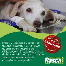 Clínicas veterinárias poderão ser proibidas de exigir pagamento antecipado para atender animais em risco