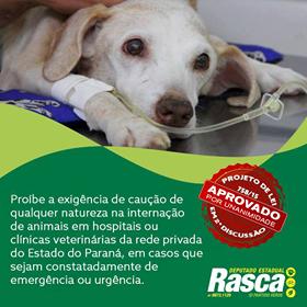 Aprovado o projeto que proíbe a exigência de caução para o atendimento de animais em situação de emergência