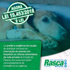 Lei proíbe a exigência de caução para o atendimento clínico de animais em situação de risco