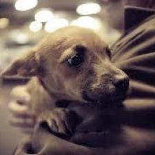 Lei 18.285/2014 - Cria o Dia do(a) Protetor(a) de Animais