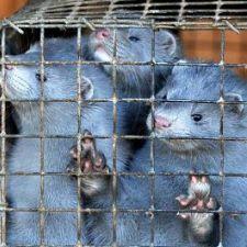 PL 410/2013 - Proibição da criação de animais para extração de peles no PR