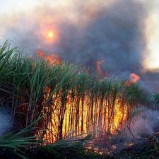 PL 186/2013 - Eliminação da despalha da cana-de-açúcar com fogo