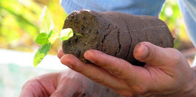 Lei 17.796/2013 - Dia da Agroecologia