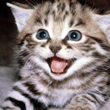 PL 163/2015 - Instituição de novo Código de Proteção aos Animais