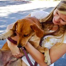 PL 290/2015 - Institui a campanha guarda responsável de animais em terminal de ônibus