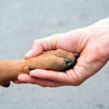 PL 843/2015 - Cria o selo protetora de animais legal